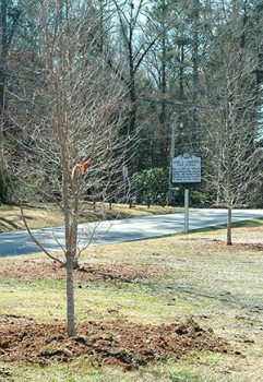 New Trees planted by the Keith House parking lot