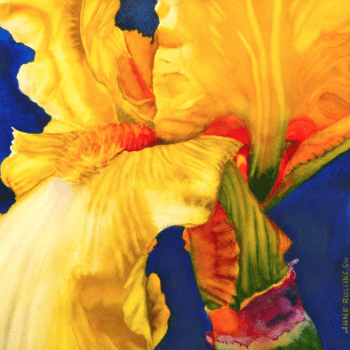 Iris 8: On to Glory Watercolor