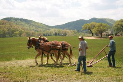 A Ploughing Demonstration in the Garden