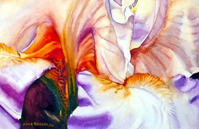 Iris 12 - Bashful Beauty Watercolor 7x10.5 by june Rollins