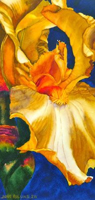 Iris 9 - Clothed In Majesty & Light Watercolor by June Rollins