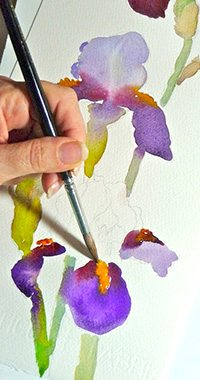 June demonstrates her watercolor technique for painting irises.