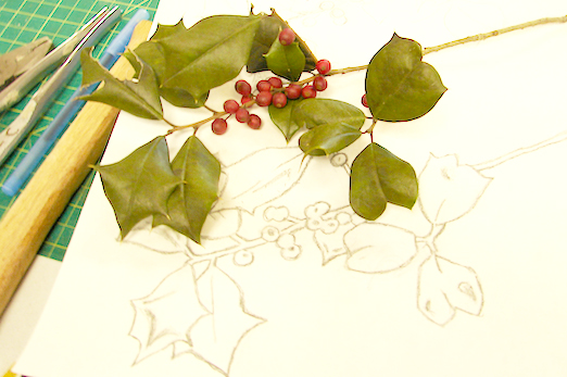 Holly Branch with Sketch and Line Drawing