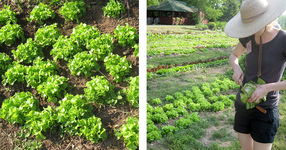 From Garden to Table: Lettuce Eat!