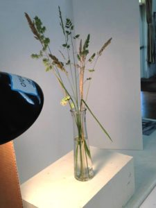 Lighting a still life with vase and grasses