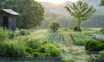 Farmer Teddy Discusses Companion Planting