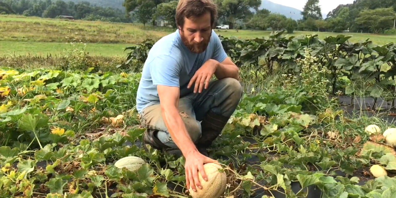 Farmer Teddy Talks About Melons