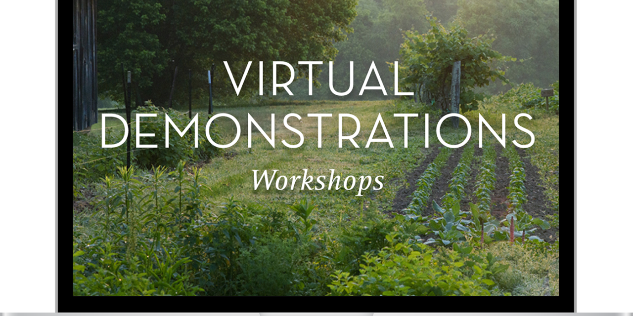 Late Summer and Fall Workshops: Virtual Demonstrations